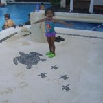 Tortugas en la alberca del Flamingo Cancun