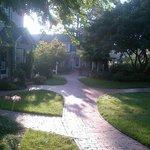 Morning strolls 2
