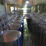 Tonéis de vinho à vista dos visitantes