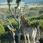 Kragga Kamma Game reserve ( close by )