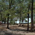 Wooded Area by Beach