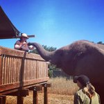 Feeding the Elephant that brought us breakfast