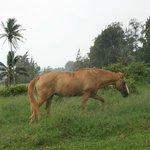 adjacent pasture