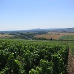 On the Champagne trail