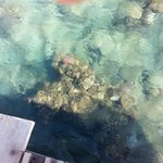 coralli visti dal pontile