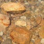Concrete rebar in the Dead Sea at the hotel