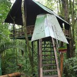 Frog Tree House