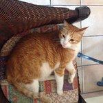 Местный котик ( я звала его бубенчик)