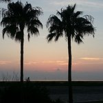 Palm Trees at the Blue Bay Inn & Suites...