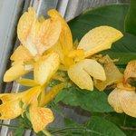 Flor do canteiro externo da Estufa de plantas tropicias