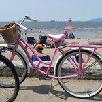 Pink bike - seawall