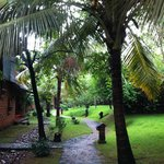 Home's way trough tropical  trees and  wonderful garden.