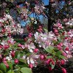 Arbustos florecidos y en excelente estado