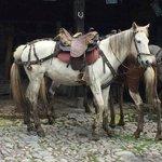 One of many beautiful horses