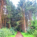 Path with pines