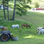 Ranch horse's