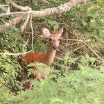 A Nosy Deer @ Raven Run
