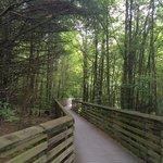 Great Swamp Wildlife Observation