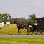Mennonite buggy.
