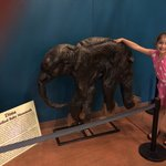Actual baby mammoth