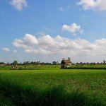 Ricefield views