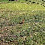 Another one squirrel in Lazienki Park