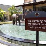 climb the elephant!