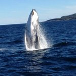 whale during Jervis Bay Wild