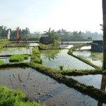 Reisfelder in der Nähe des Hotels