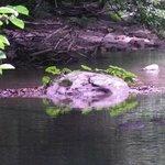 Escursione cascata Acquacheta