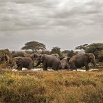 Elephants at the waterhole just behind Tawi Lodge