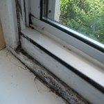 Mould on window frame