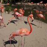 The flamingos seem more orange than pink...