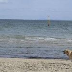 dog enjoying
