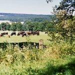 Tierpark Sababurg (bison)