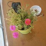 настоящие цветы на столиках