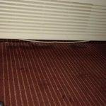 nasty moldy carpet