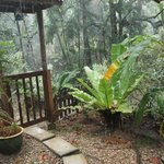 """Our""private  garden (in a tropical rainstorm :-) )"