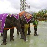 Слоны артисты