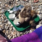 Real tea on the beach. Don't mention the wolf !!