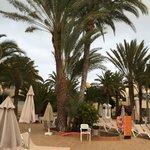 Zona de tumbonas piscina (Oliva Village)