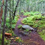 easy walking trail