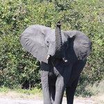 Eléphant à  Goha Hills