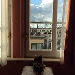 Lil Bub enjoying the scenic sitting area in the suite!