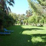 vegetation luxuriante