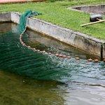 Fische werden umgesetzt