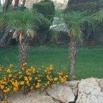Lambis gardens