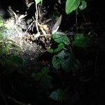 Hidden Picture - Female tarantula