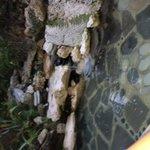 Zen  mediation pond