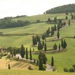 """This famous road from the movie """"Under the Tuscan Sun"""" was very close to Maura's house."""